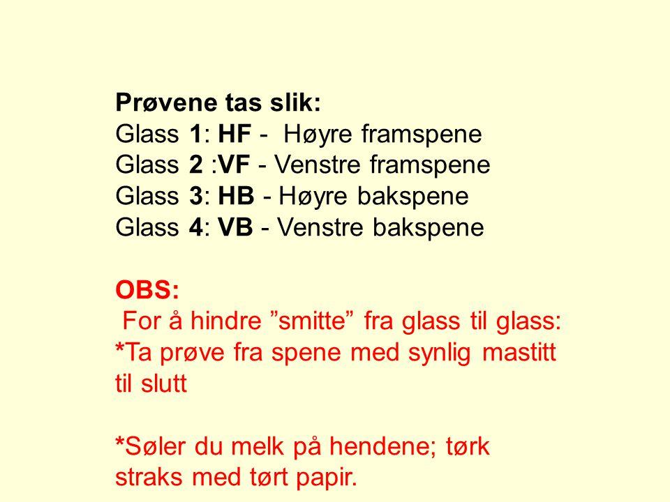 Prøvene tas slik: Glass 1: HF - Høyre framspene Glass 2 :VF - Venstre framspene Glass 3: HB - Høyre bakspene Glass 4: VB - Venstre bakspene OBS: For å