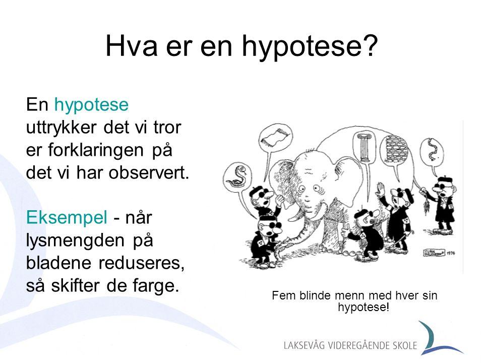 Hva er en hypotese? Fem blinde menn med hver sin hypotese! En hypotese uttrykker det vi tror er forklaringen på det vi har observert. Eksempel - når l