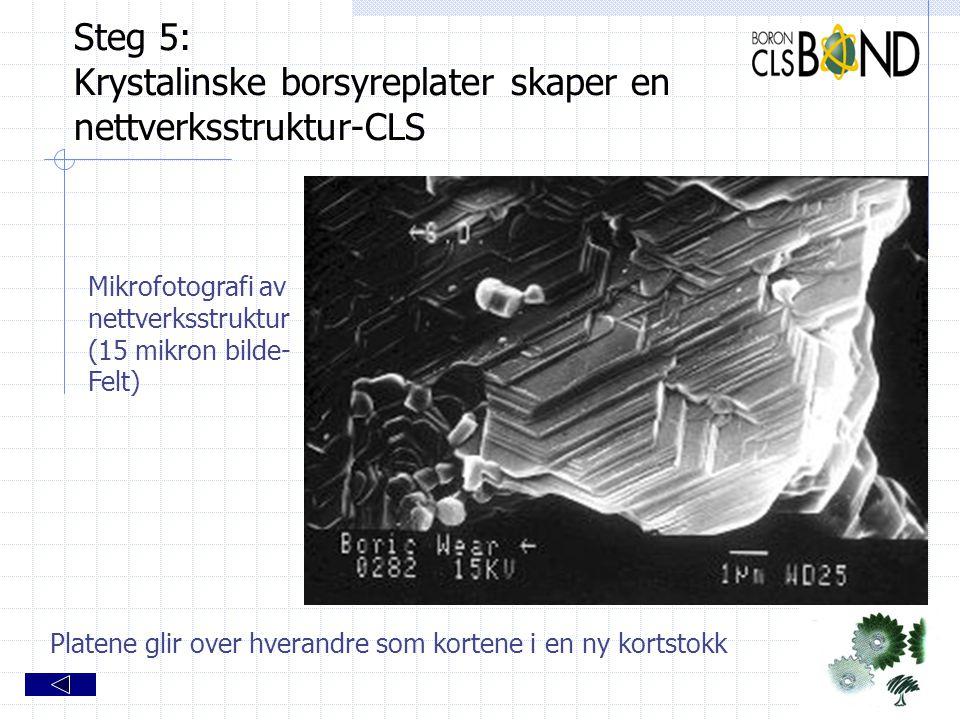 Steg 5: Krystalinske borsyreplater skaper en nettverksstruktur-CLS Mikrofotografi av nettverksstruktur (15 mikron bilde- Felt) Platene glir over hvera