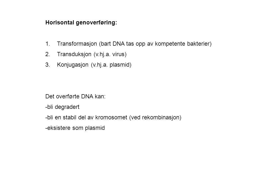 Horisontal genoverføring: 1.Transformasjon (bart DNA tas opp av kompetente bakterier) 2.Transduksjon (v.hj.a. virus) 3.Konjugasjon (v.hj.a. plasmid) D