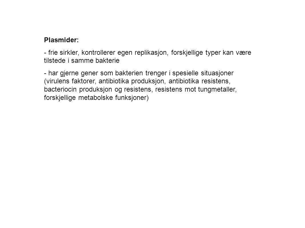 Plasmider: - frie sirkler, kontrollerer egen replikasjon, forskjellige typer kan være tilstede i samme bakterie - har gjerne gener som bakterien treng