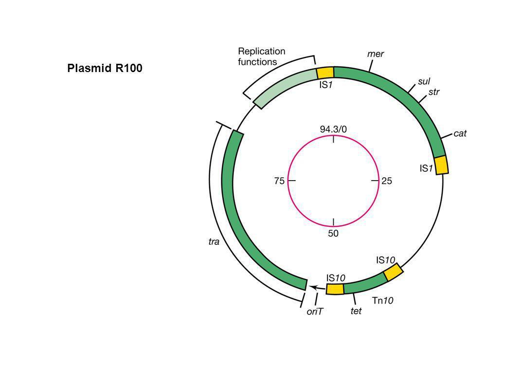 Plasmid R100