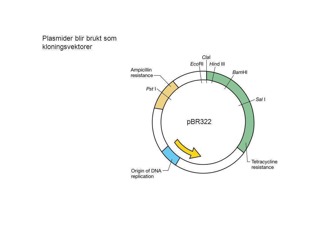 Plasmider blir brukt som kloningsvektorer pBR322