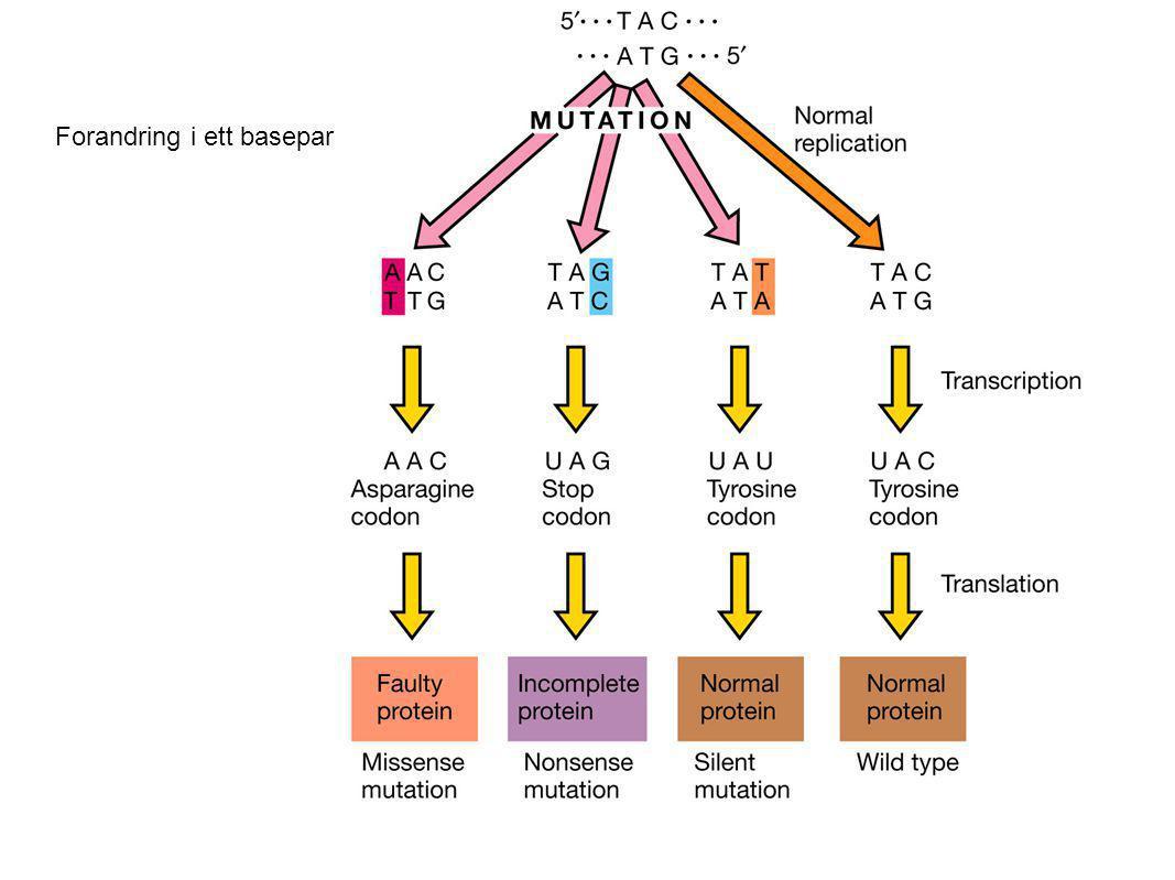 Den genetiske koden leses 3 og 3 baser.