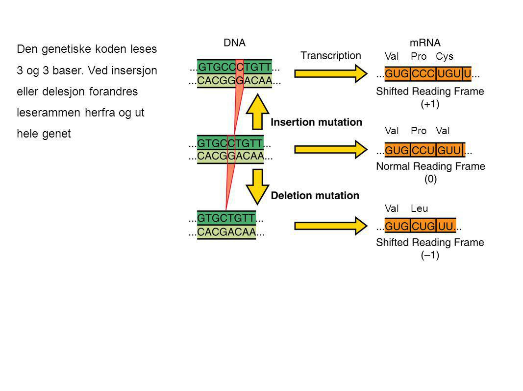 Den genetiske koden leses 3 og 3 baser. Ved insersjon eller delesjon forandres leserammen herfra og ut hele genet Val Pro Cys Val Pro Val Val Leu