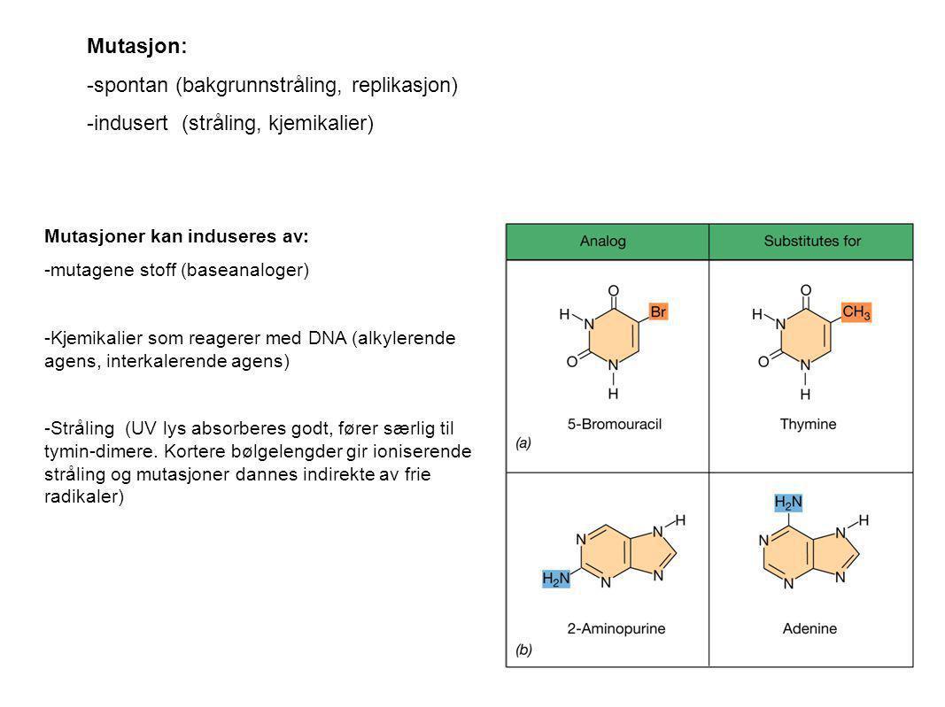 Mutasjoner kan induseres av: -mutagene stoff (baseanaloger) -Kjemikalier som reagerer med DNA (alkylerende agens, interkalerende agens) -Stråling (UV