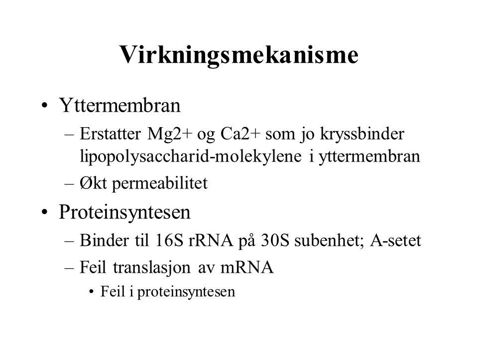Virkningsmekanisme •Yttermembran –Erstatter Mg2+ og Ca2+ som jo kryssbinder lipopolysaccharid-molekylene i yttermembran –Økt permeabilitet •Proteinsyn
