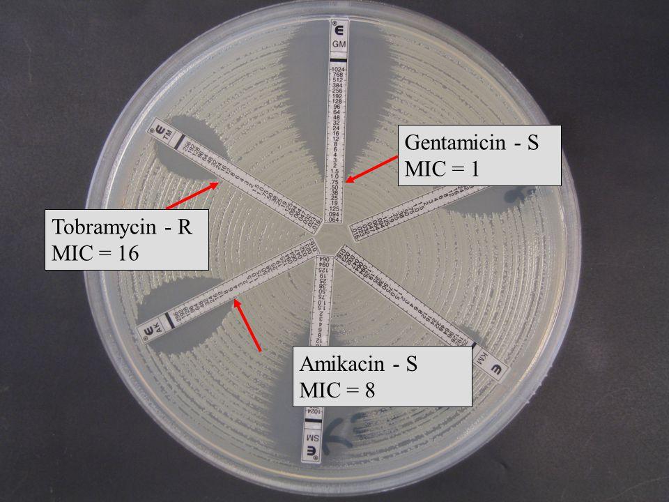 Tobramycin - R MIC = 16 Gentamicin - S MIC = 1 Amikacin - S MIC = 8