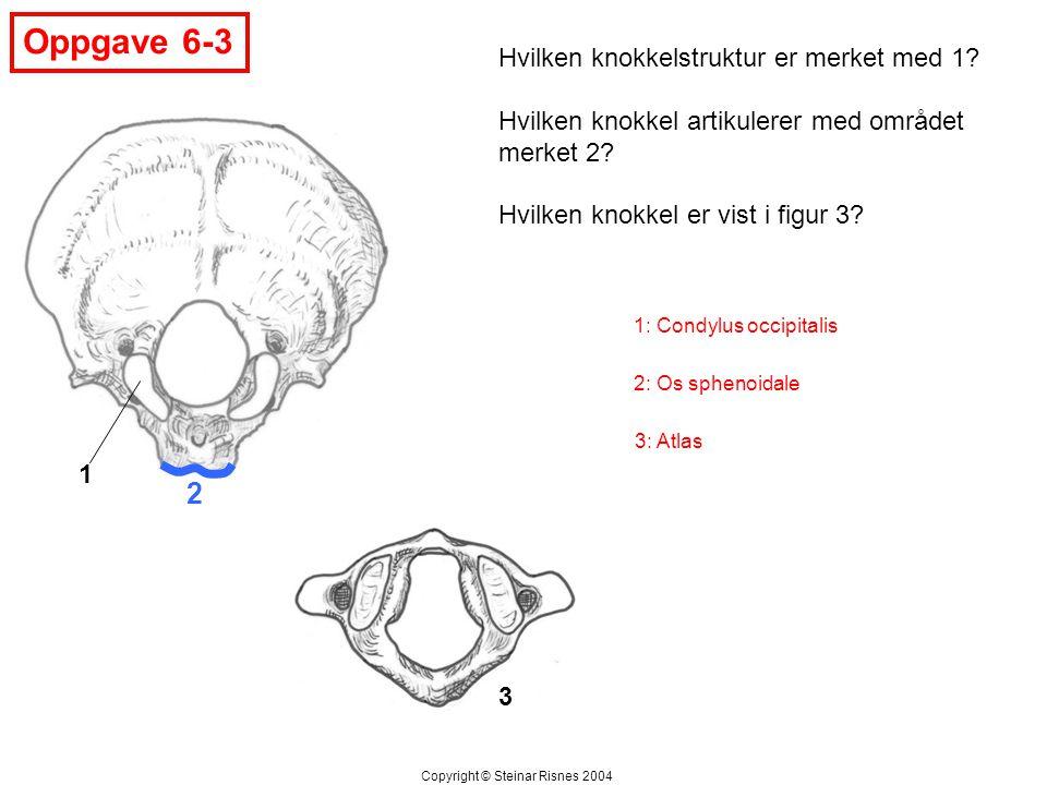 2 Oppgave 6-3 1 3 Hvilken knokkelstruktur er merket med 1? Hvilken knokkel artikulerer med området merket 2? Hvilken knokkel er vist i figur 3? Copyri