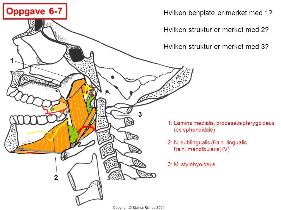 Oppgave 6-7 1 2 3 Hvilken benplate er merket med 1? Hvilken struktur er merket med 2? Hvilken struktur er merket med 3? Copyright © Steinar Risnes 200
