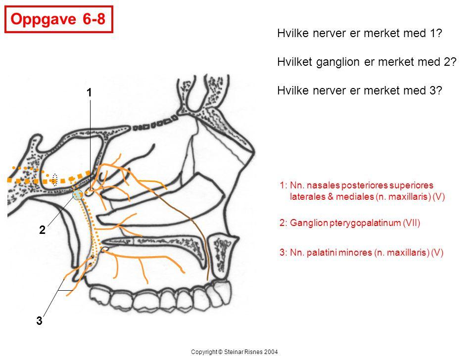 Oppgave 6-8 1 2 3 Hvilke nerver er merket med 1? Hvilket ganglion er merket med 2? Hvilke nerver er merket med 3? Copyright © Steinar Risnes 2004 1: N