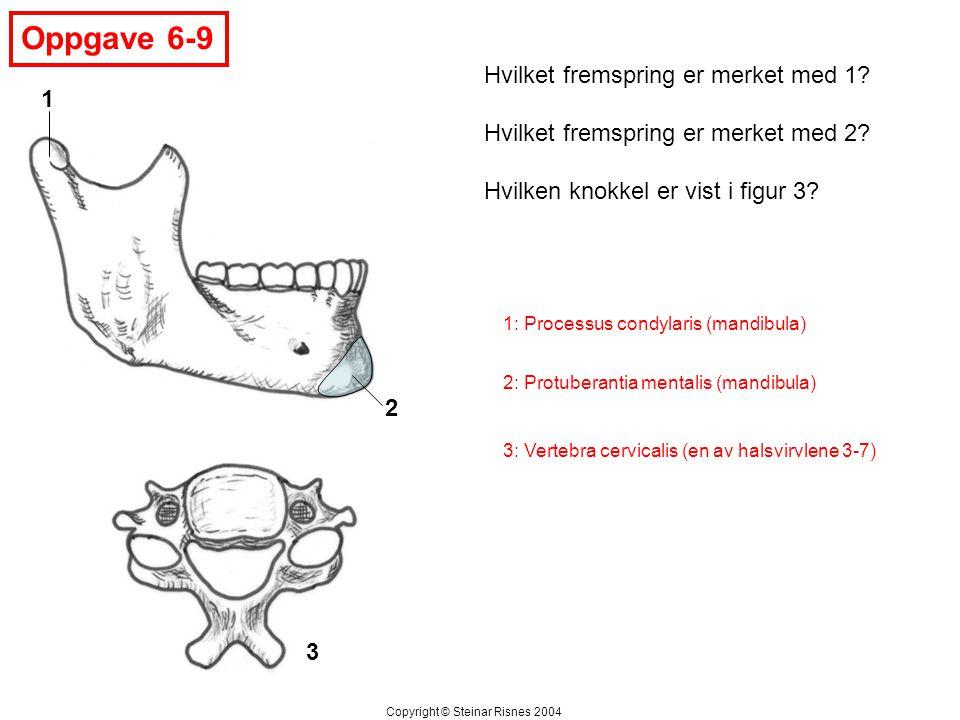 Oppgave 6-9 3 1 2 Hvilket fremspring er merket med 1.