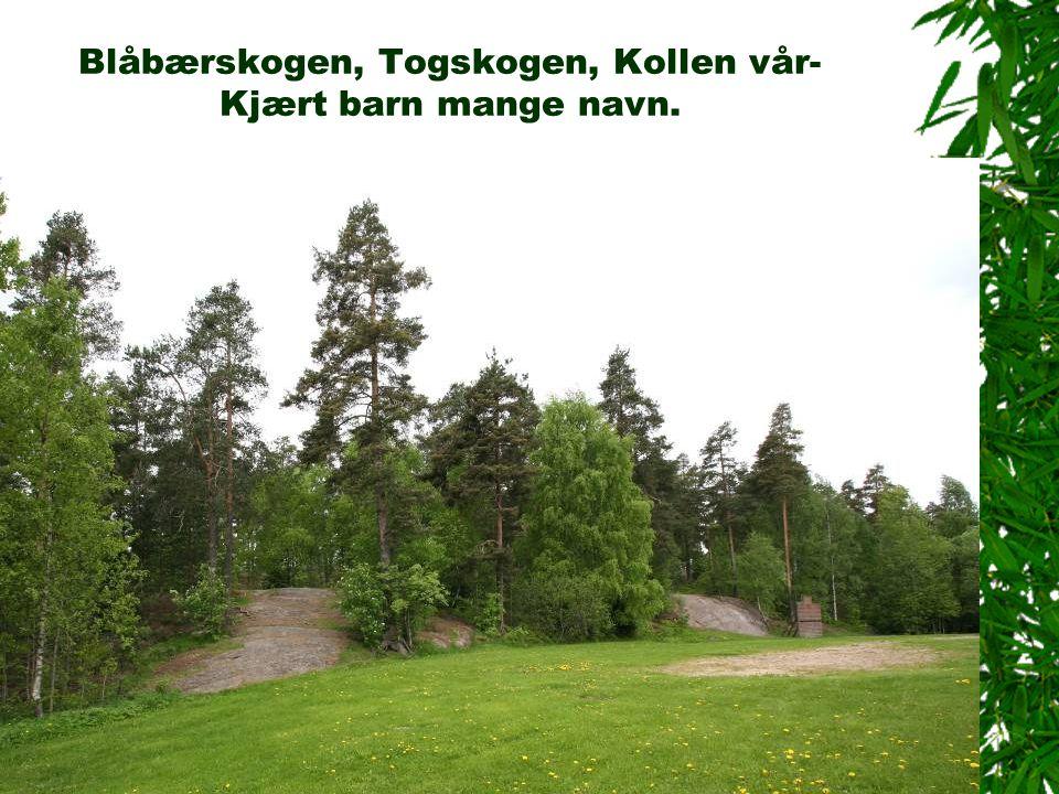 Det regulerte området fortettes av småhusbebyggelse Stovnerskogen brl Hagastubben sameie Stovnerbakken brl Stovnerbakken Stasjonsfjellet skole Villabebyggelse