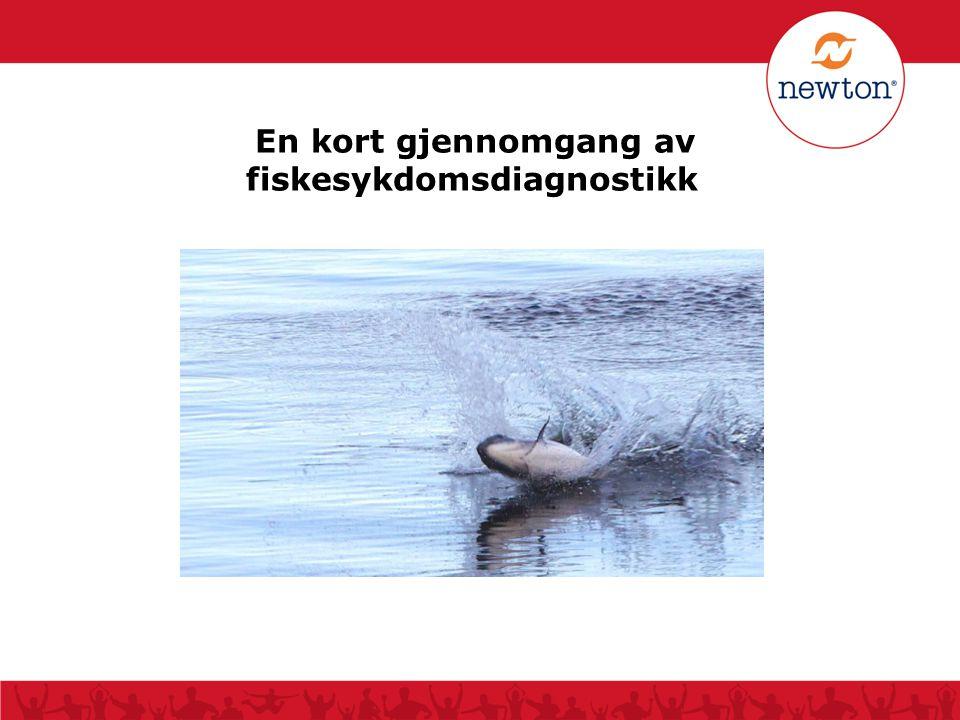 En kort gjennomgang av fiskesykdomsdiagnostikk