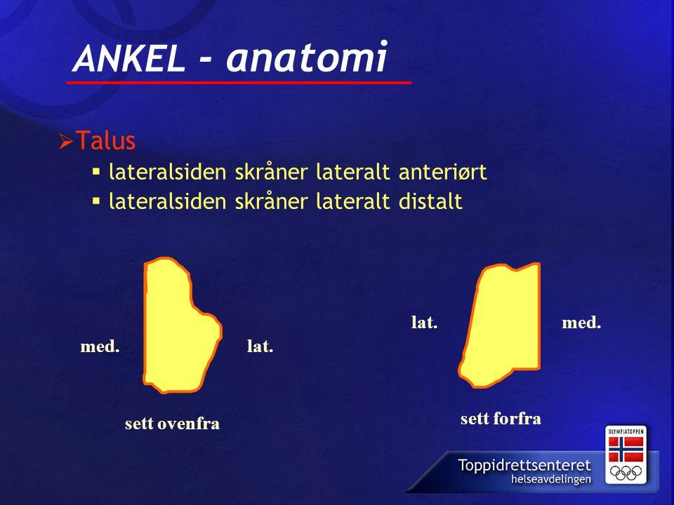 ANKEL - anatomi  Talus  lateralsiden skråner lateralt anteriørt  lateralsiden skråner lateralt distalt med.lat. med. sett ovenfra sett forfra