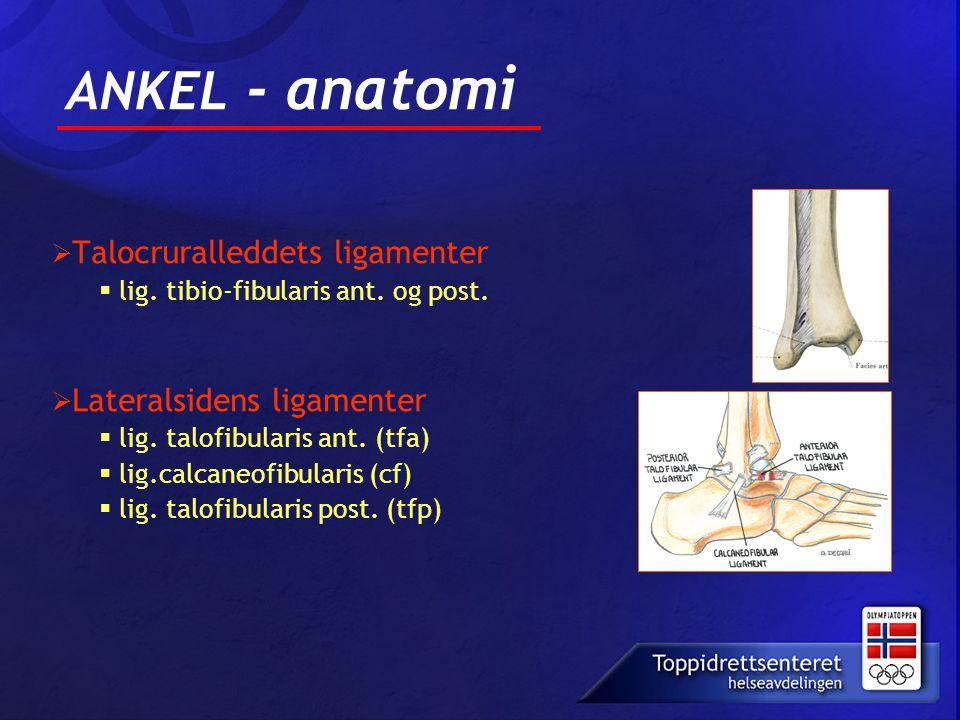  Talocruralleddets ligamenter  lig. tibio-fibularis ant. og post.  Lateralsidens ligamenter  lig. talofibularis ant. (tfa)  lig.calcaneofibularis