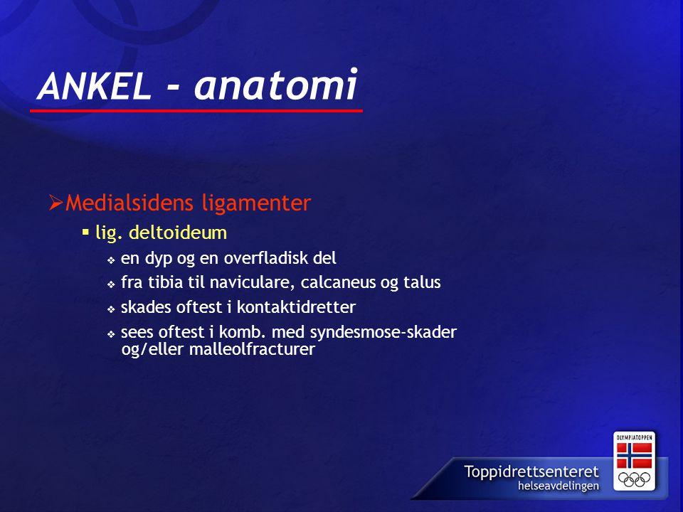 ANKEL - anatomi  Medialsidens ligamenter  lig. deltoideum  en dyp og en overfladisk del  fra tibia til naviculare, calcaneus og talus  skades oft