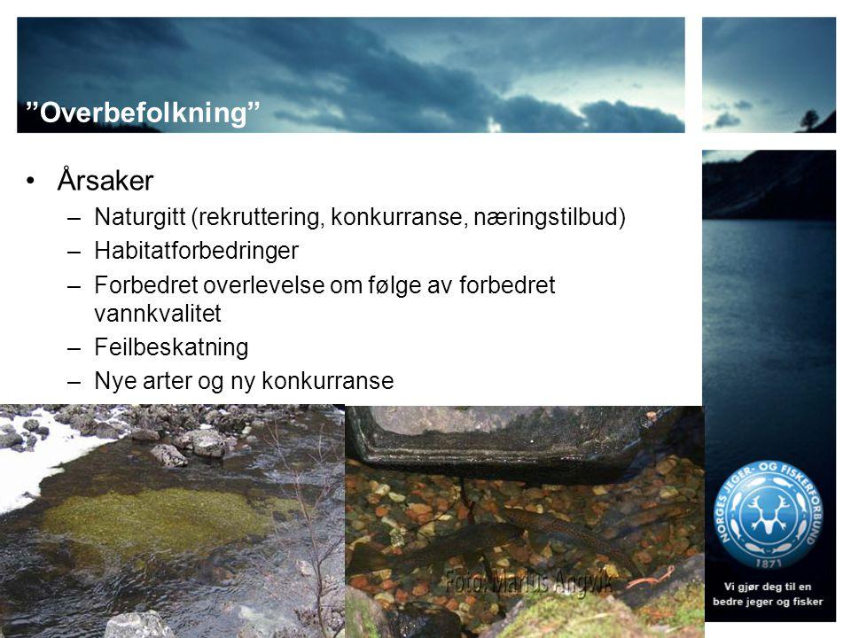 """""""Overbefolkning"""" •Årsaker –Naturgitt (rekruttering, konkurranse, næringstilbud) –Habitatforbedringer –Forbedret overlevelse om følge av forbedret vann"""