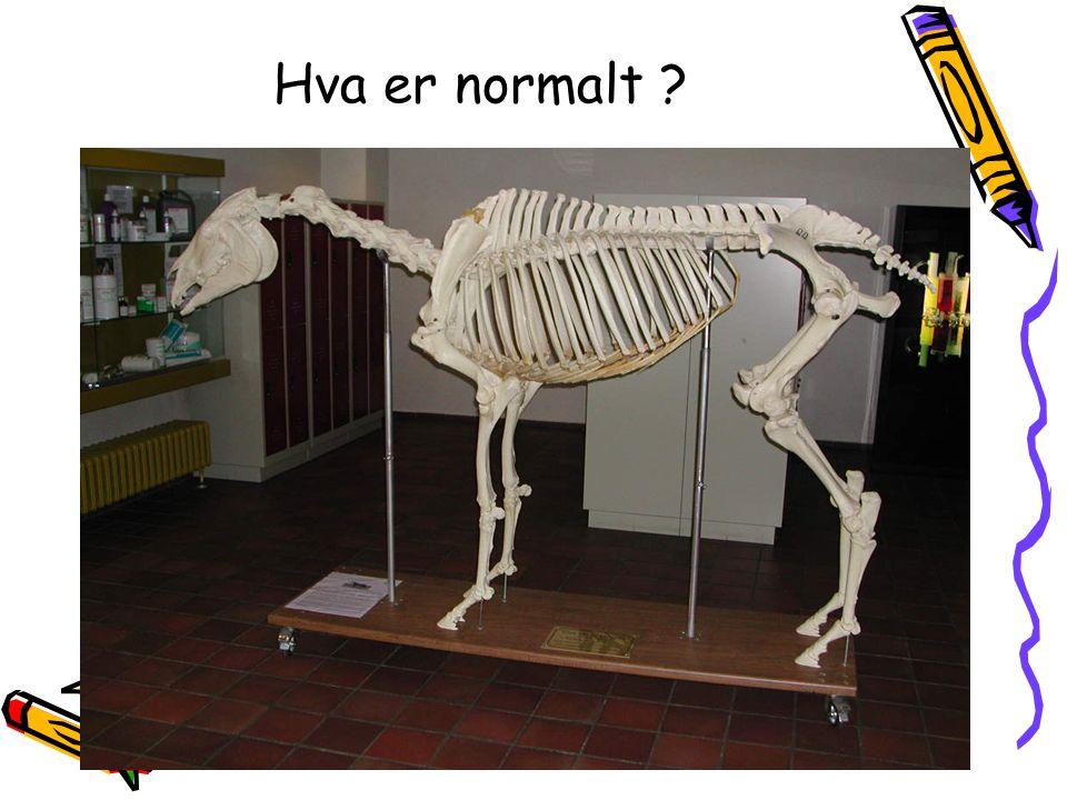 Hva er normalt ?