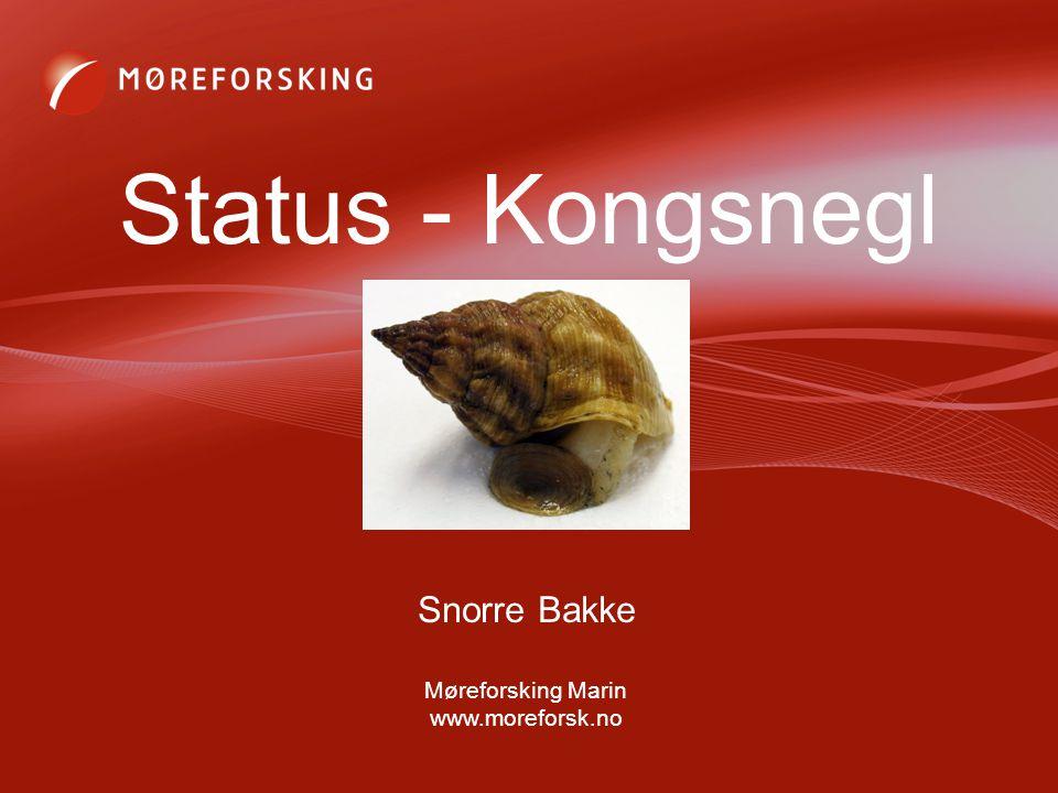 Status - Kongsnegl Snorre Bakke Møreforsking Marin www.moreforsk.no