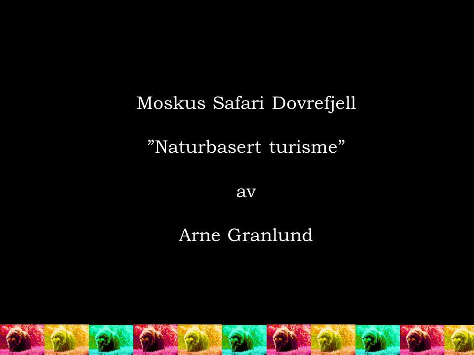 """Moskus Safari Dovrefjell """"Naturbasert turisme"""" av Arne Granlund"""