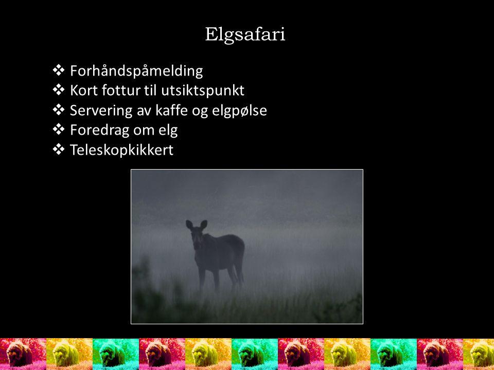  Forhåndspåmelding  Kort fottur til utsiktspunkt  Servering av kaffe og elgpølse  Foredrag om elg  Teleskopkikkert Elgsafari