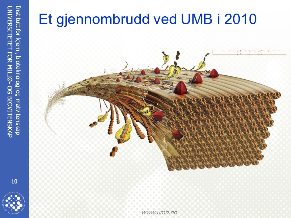 Institutt for kjemi, bioteknologi og matvitenskap 10 UNIVERSITETET FOR MILJØ- OG BIOVITENSKAP www.umb.no Et gjennombrudd ved UMB i 2010
