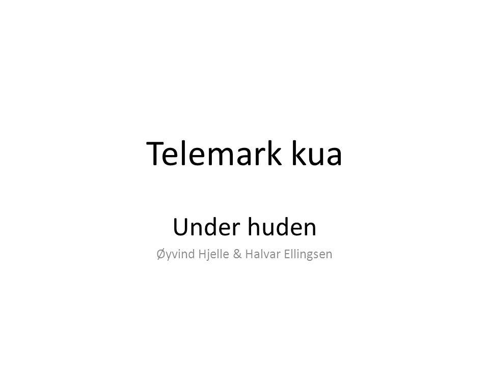 Telemark kua Under huden Øyvind Hjelle & Halvar Ellingsen