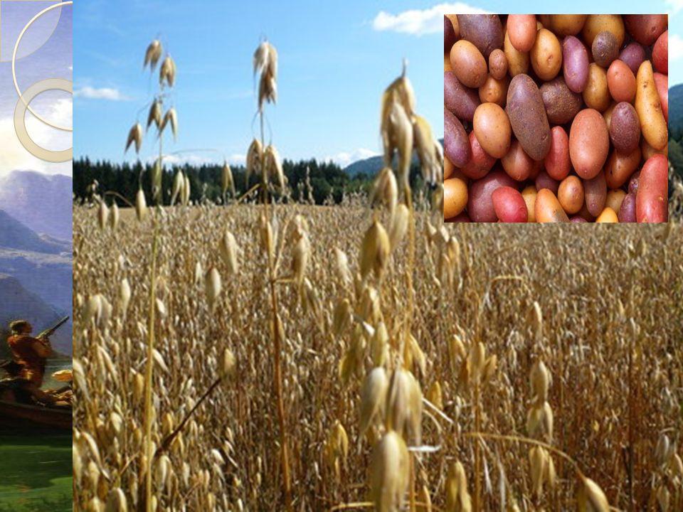 Økonomi i det førindustrielle samfunnet  Det økende antallet mennesker førte til endringer i jordbrukssamfunnet  Matproduksjonen økte sterkt og importen avtok  Kornproduksjonen økte i tillegg til at potetdyrking ble vanlig  Nye skogområder ble ryddet og jordbruksarealet økte med 20 %  Bøndene tok i bruk nye redskaper og metoder  Også andelen husdyr økte med 50 %