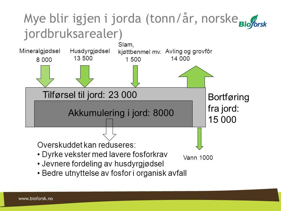 Mye blir igjen i jorda (tonn/år, norske jordbruksarealer) MineralgjødselHusdyrgjødsel 13 500 Slam, kjøttbenmel mv. 1 500 8 000 Tilførsel til jord: 23