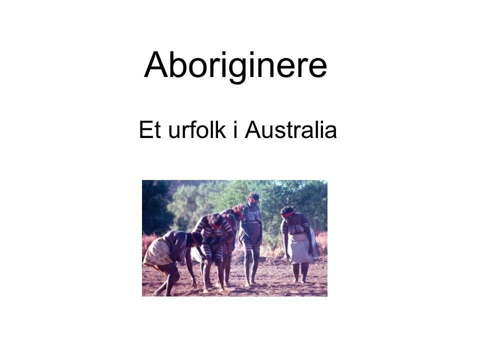 Aboriginere før i tiden •Kom trolig til Australia for 40 000 – 60 000 år siden.