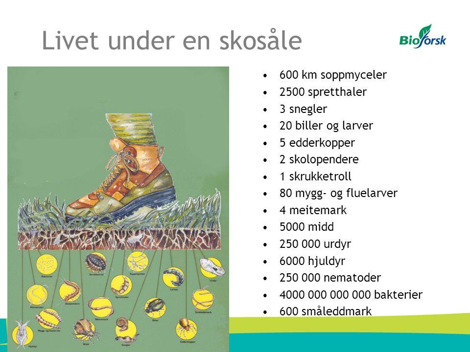 Livet under en skosåle •600 km soppmyceler •2500 spretthaler •3 snegler •20 biller og larver •5 edderkopper •2 skolopendere •1 skrukketroll •80 mygg- og fluelarver •4 meitemark •5000 midd •250 000 urdyr •6000 hjuldyr •250 000 nematoder •4000 000 000 000 bakterier •600 småleddmark