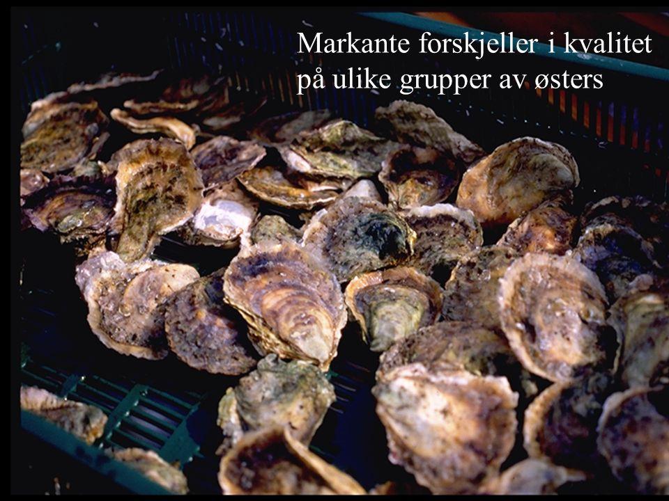 7 7 Markante forskjeller i kvalitet på ulike grupper av østers