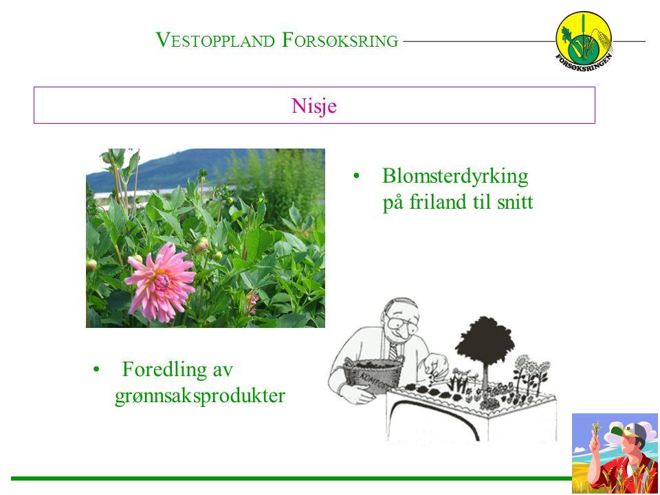 Nisje • Blomsterdyrking på friland til snitt • Foredling av grønnsaksprodukter V ESTOPPLAND F ORSØKSRING ———————————