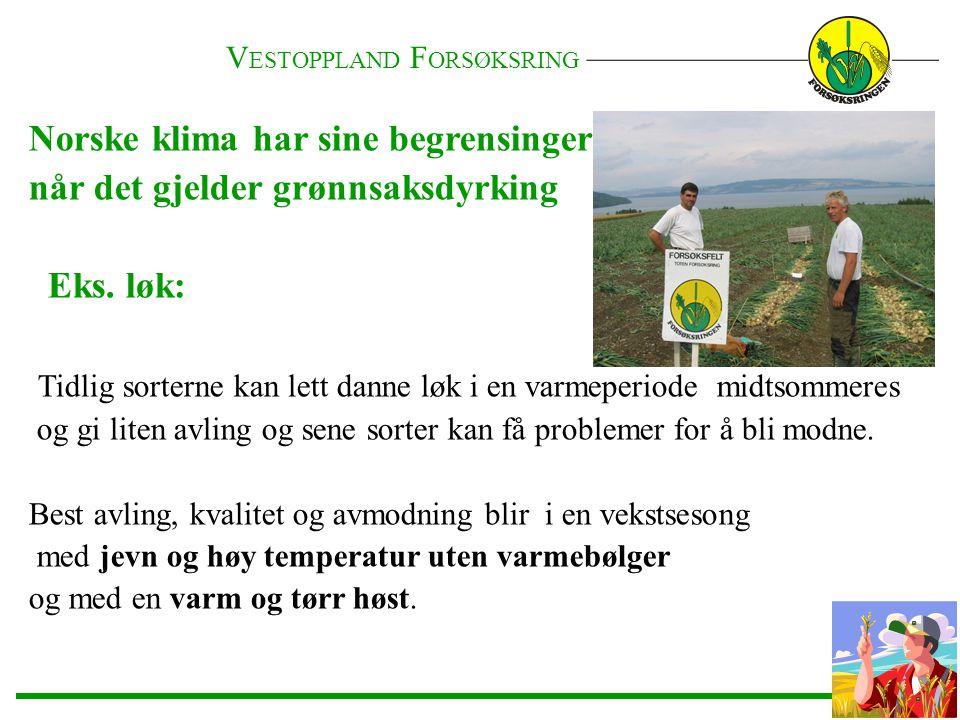 Norske klima har sine begrensinger når det gjelder grønnsaksdyrking Eks. løk: Tidlig sorterne kan lett danne løk i en varmeperiode midtsommeres og gi