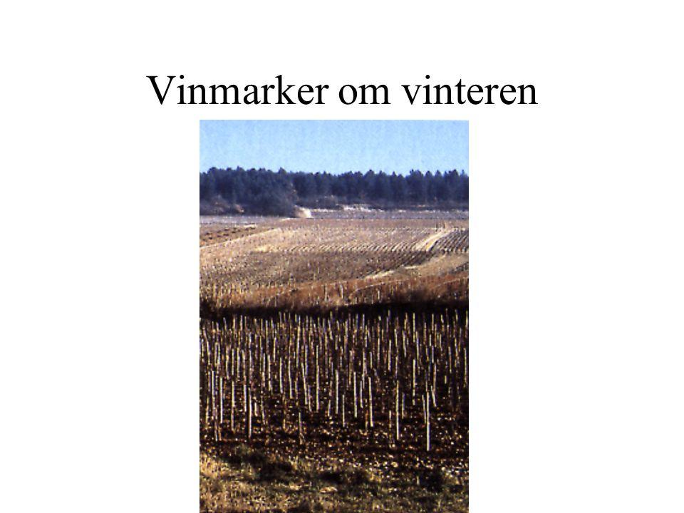 Vinmarker om vinteren