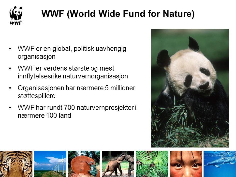 WWF (World Wide Fund for Nature) •WWF er en global, politisk uavhengig organisasjon •WWF er verdens største og mest innflytelsesrike naturvernorganisa