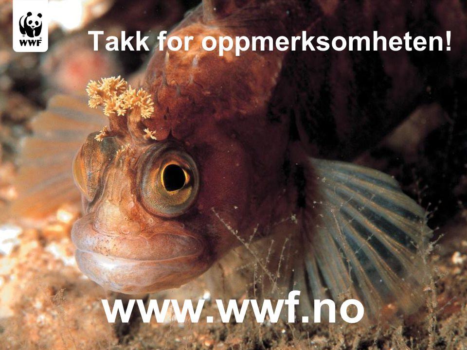 www.wwf.no Takk for oppmerksomheten!