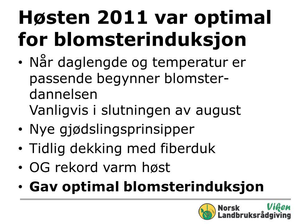 Høsten 2011 var optimal for blomsterinduksjon • Når daglengde og temperatur er passende begynner blomster- dannelsen Vanligvis i slutningen av august • Nye gjødslingsprinsipper • Tidlig dekking med fiberduk • OG rekord varm høst • Gav optimal blomsterinduksjon