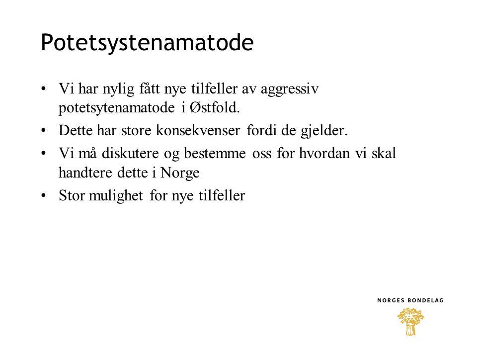 Potetsystenamatode •Vi har nylig fått nye tilfeller av aggressiv potetsytenamatode i Østfold.
