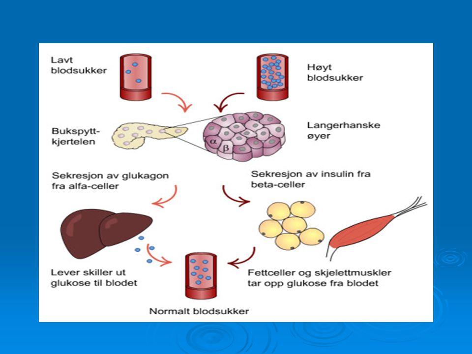 Hva skjer i bukspyttkjertelen  Måler glukosekonsentrasjonen