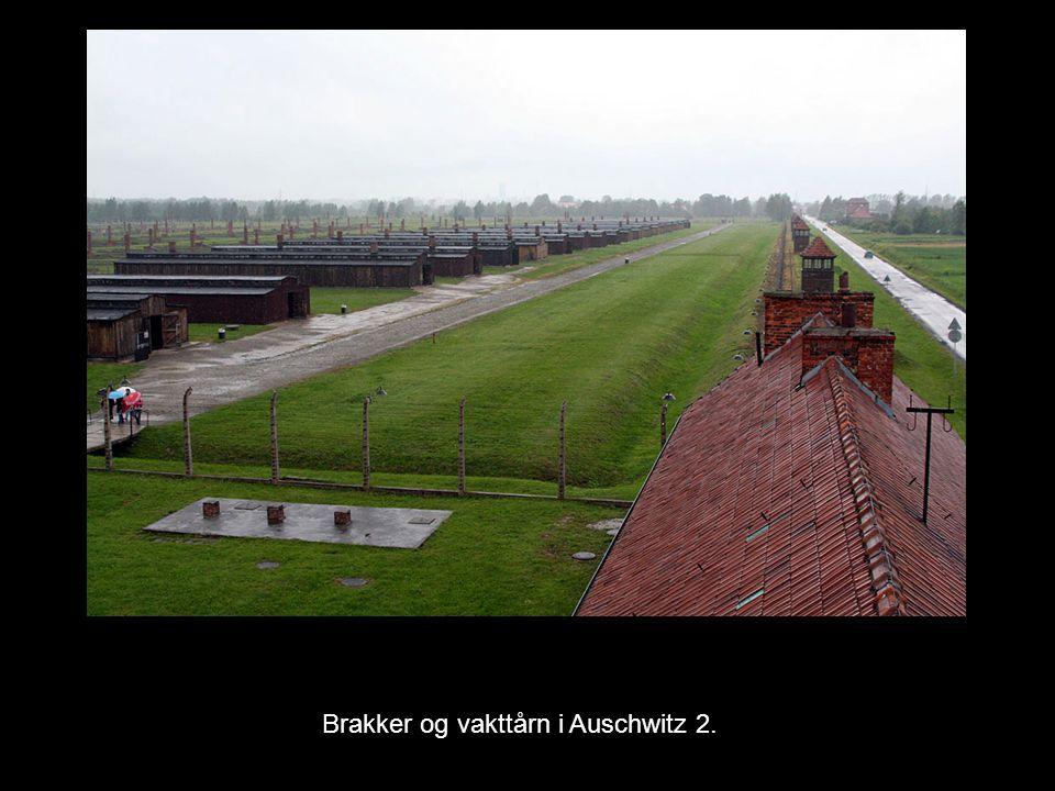 Brakker og vakttårn i Auschwitz 2.