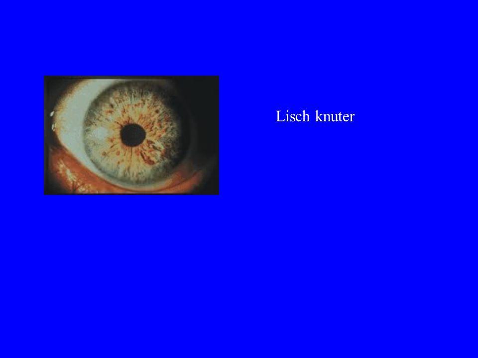 Lisch knuter