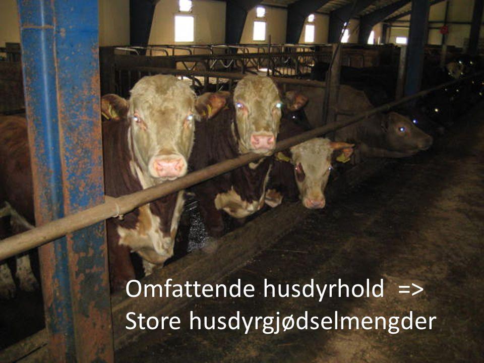 Omfattende husdyrhold => Store husdyrgjødselmengder