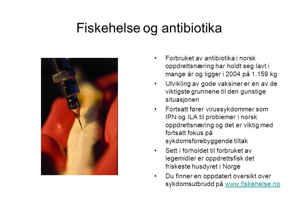 Fiskehelse og antibiotika •Forbruket av antibiotika i norsk oppdrettsnæring har holdt seg lavt i mange år og ligger i 2004 på 1.159 kg •Utvikling av g