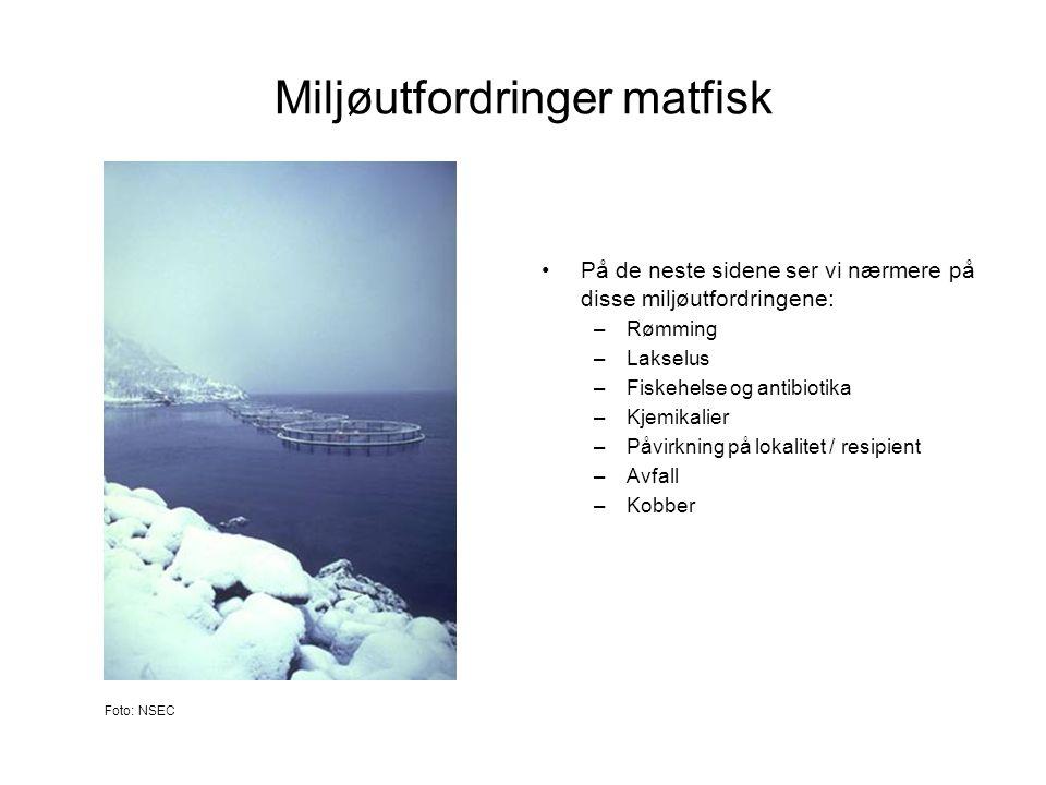 Miljøutfordringer matfisk •På de neste sidene ser vi nærmere på disse miljøutfordringene: –Rømming –Lakselus –Fiskehelse og antibiotika –Kjemikalier –
