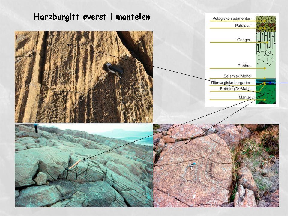 Lagdelte ultramafiske bergarter nederst i havbunnsskorpa Petrologisk Moho