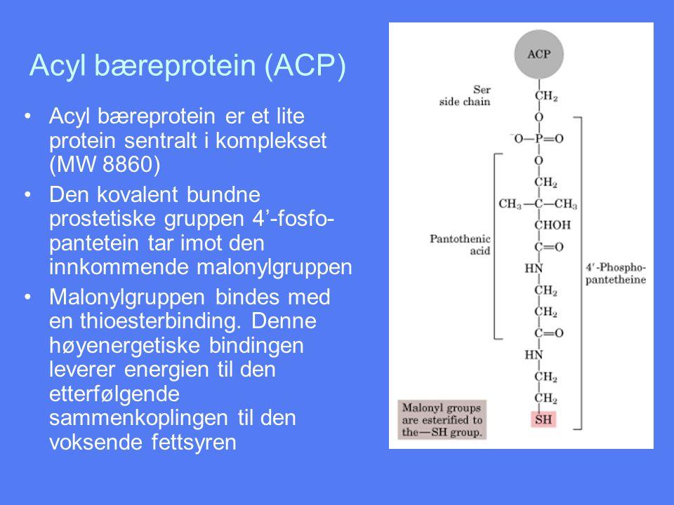 Oppstart av fettsyresyntesen •Først overføres en acetylgruppe til  - ketoacyl-ACP-syntase •Acetylgruppen festes med en høyenergetisk thioesterbinding •Enzymet er acetyl-CoA- ACP-transacetylase
