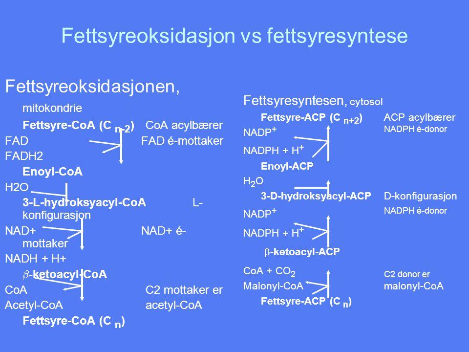 Fettsyreoksidasjon vs fettsyresyntese Fettsyreoksidasjonen, mitokondrie Fettsyre-CoA (C n-2 )CoA acylbærer FAD FAD é-mottaker FADH2 Enoyl-CoA H2O 3-L-