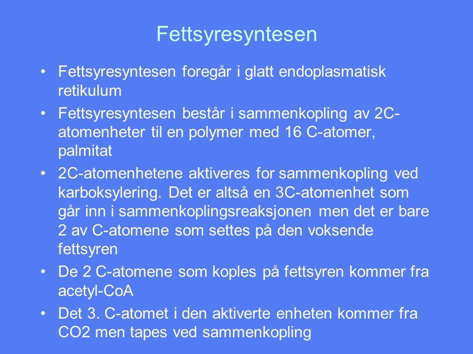 Fettsyresyntesen •Fettsyresyntesen foregår i glatt endoplasmatisk retikulum •Fettsyresyntesen består i sammenkopling av 2C- atomenheter til en polymer med 16 C-atomer, palmitat •2C-atomenhetene aktiveres for sammenkopling ved karboksylering.